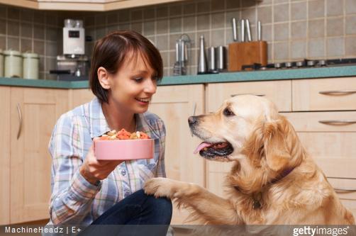 Quels sont les besoins nutritionnels pour les chiens adultes ?