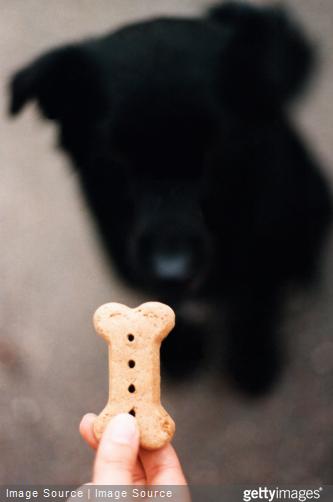Adaptez le régime alimentaire de votre chien, si vous avez pour habitude de lui donner des friandises dans la journée.