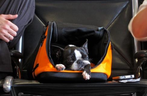 chien aéroport
