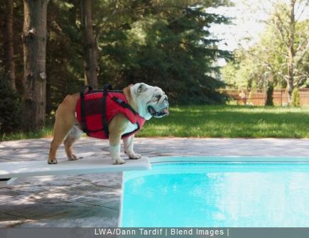 chien sur plongeoir