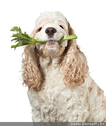 chien avec celeri dans la gueule
