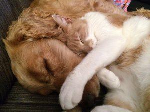 faire-cohabiter-chat-chien-1