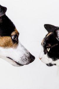 faire-cohabiter-chat-chien-2