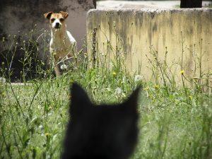 faire-cohabiter-chat-chien-3