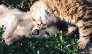 faire-cohabiter-chat-chien-5