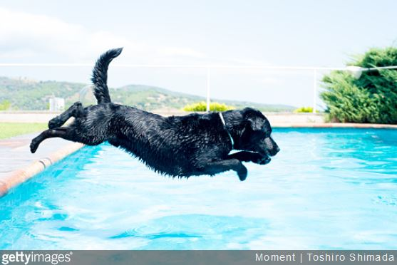 piscine-animal-compagnie-securite