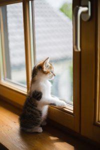chaton qui regarde par la fenêtre